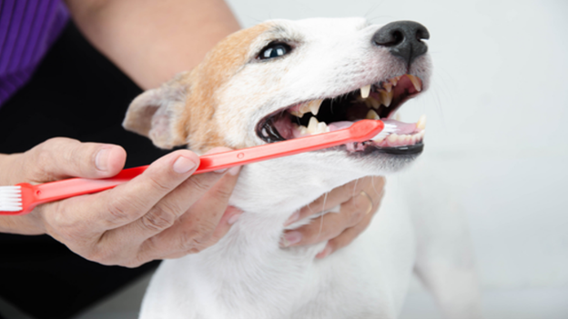 dog dental hygiene tips from [hospital name] in [city, state]